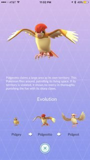 Pidgeotto showing evolutions
